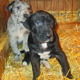 Available black female & Newton