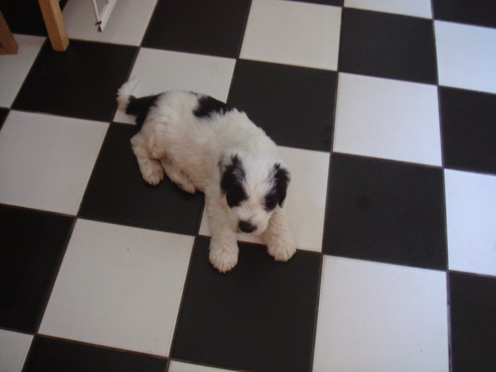 Pups Anne 2011 (2)
