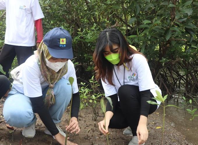 PLN Peduli Tanam 3.500 Bibit Mangrove, Antisipasi Abrasi Pesisir Pantai Lampung