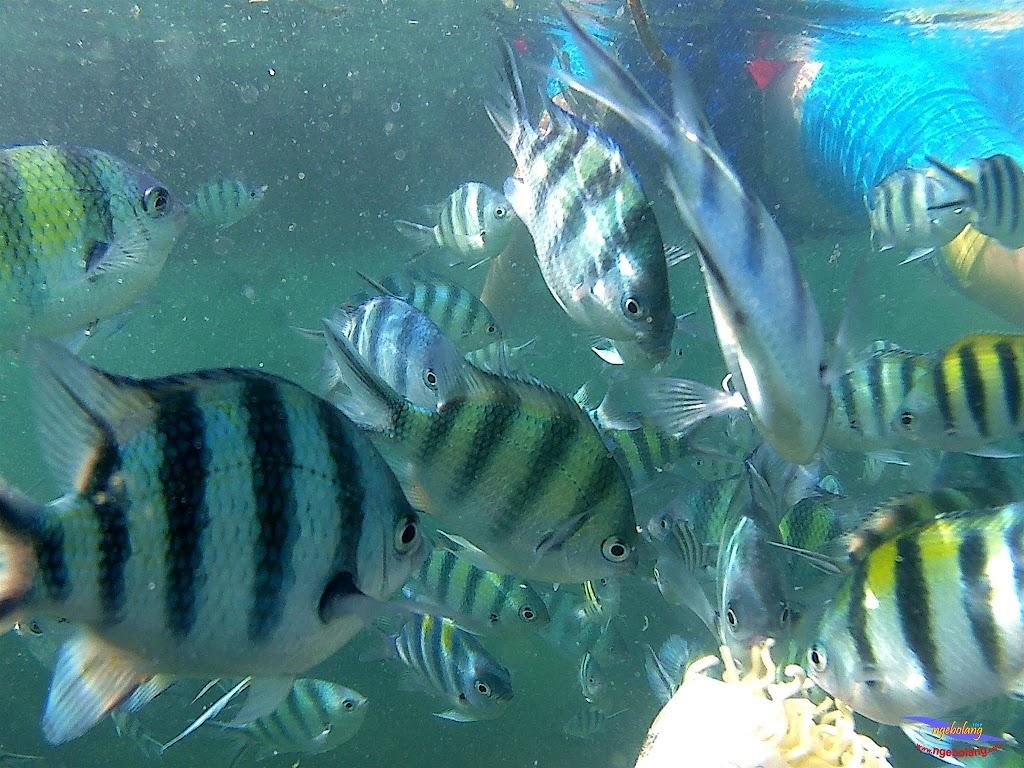 family trip pulau pari 140716 GoPro 43