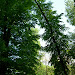 Park przy Pałacu Miroszewskich