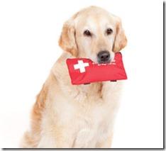 Cachorro-primeiro-socorros
