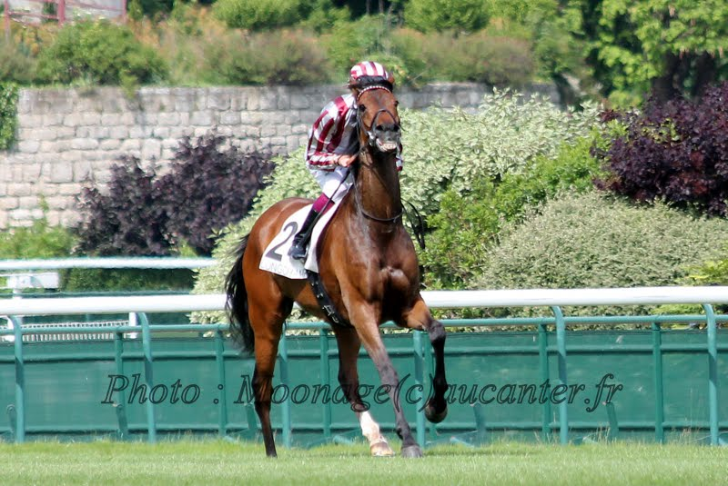 Photos Longchamp 25-05-2014 IMG_1343