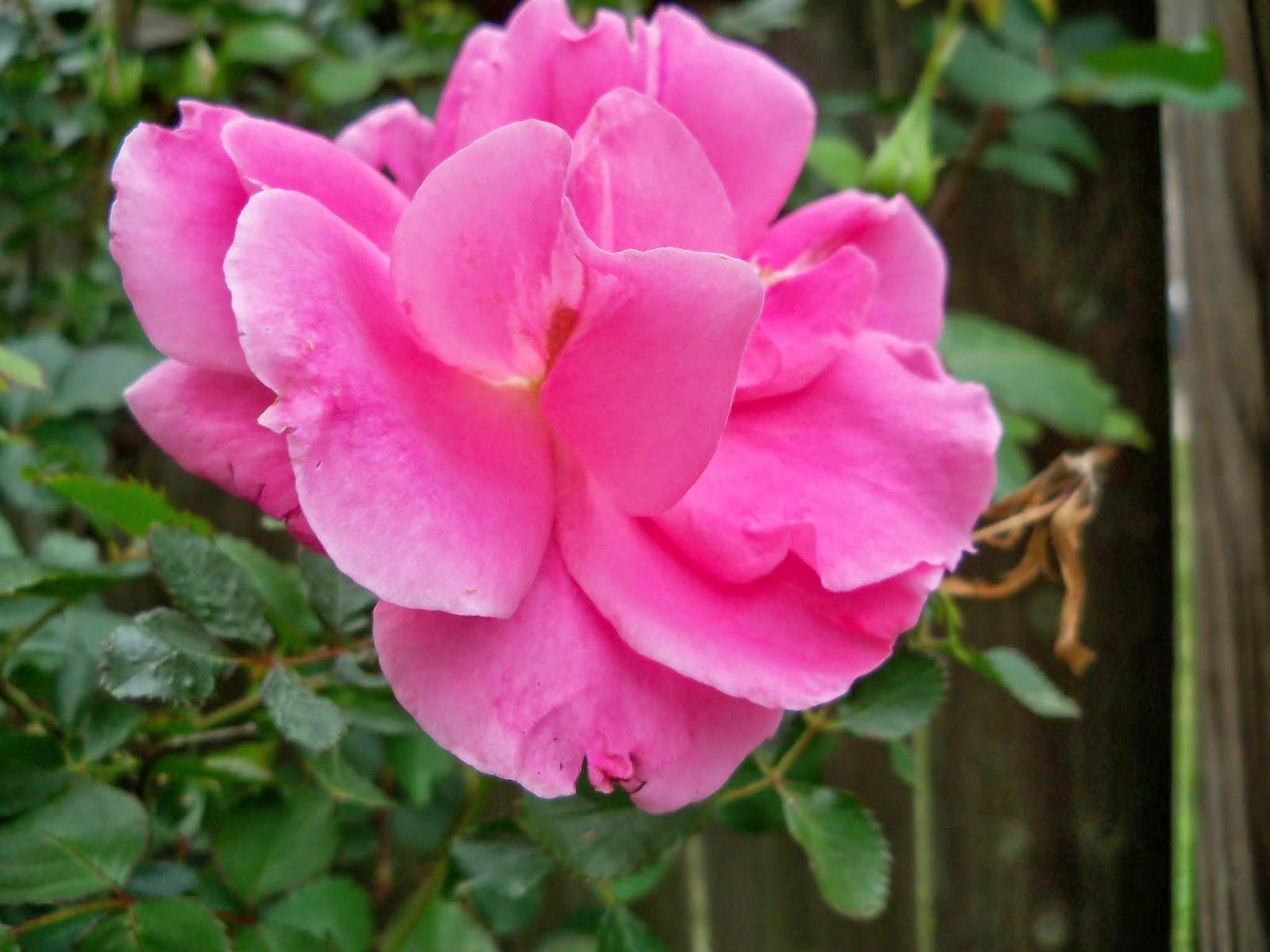 Gardening 2014 - 116_1276.JPG
