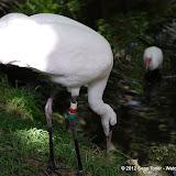 04-07-12 Homosassa Springs State Park - IMGP4559.JPG