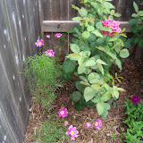 Gardening 2010, Part Two - 101_2659.JPG
