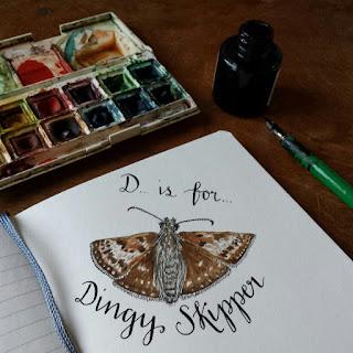 Dingy Skipper :: www.AliceDrawsTheLine.co.uk
