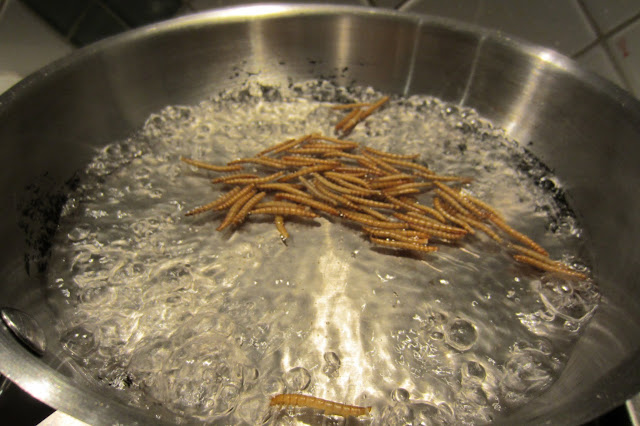 boil mealworms water