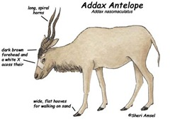 addax_diagram