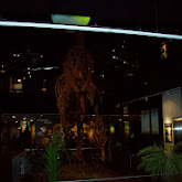 Houston Museum of Natural Science, Sugar Land - 114_6664.JPG