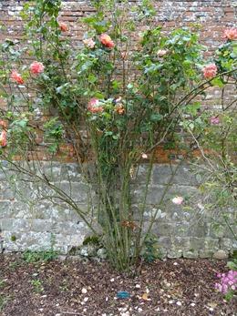 2017.08.10-043 la roseraie des vivaces