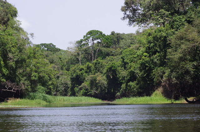 Le confluent de la Soo et la Nyong, Ebogo (Cameroun), 8 avril 2012. Photo : J.-M. Gayman