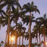 La Place des Palmistes à Cayenne. 3 décembre 2011. Photo : J.-M. Gayman
