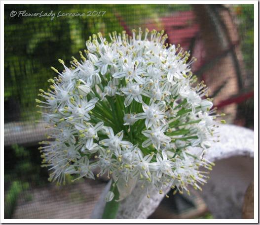 04-03-onion-blossom