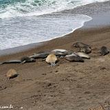 Elefantes marinhos - Península Valdez, Argentina