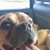 Oli a Puggle :)