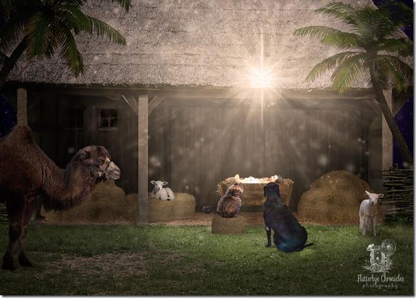 Matilda, Matt & Baby Jesus 2018 (©Jenny @ Flutterbye Chronicles)