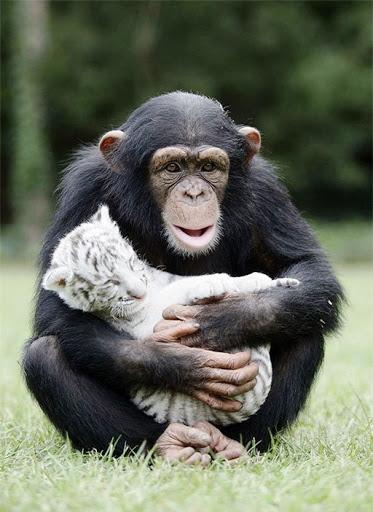 Đón năm Thân nghe chuyện cha mẹ Khỉ – con là chó, mèo, cọp…