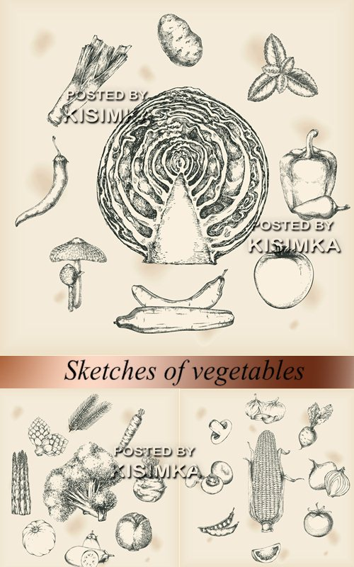 Stock Photo: Sketches of vegetables