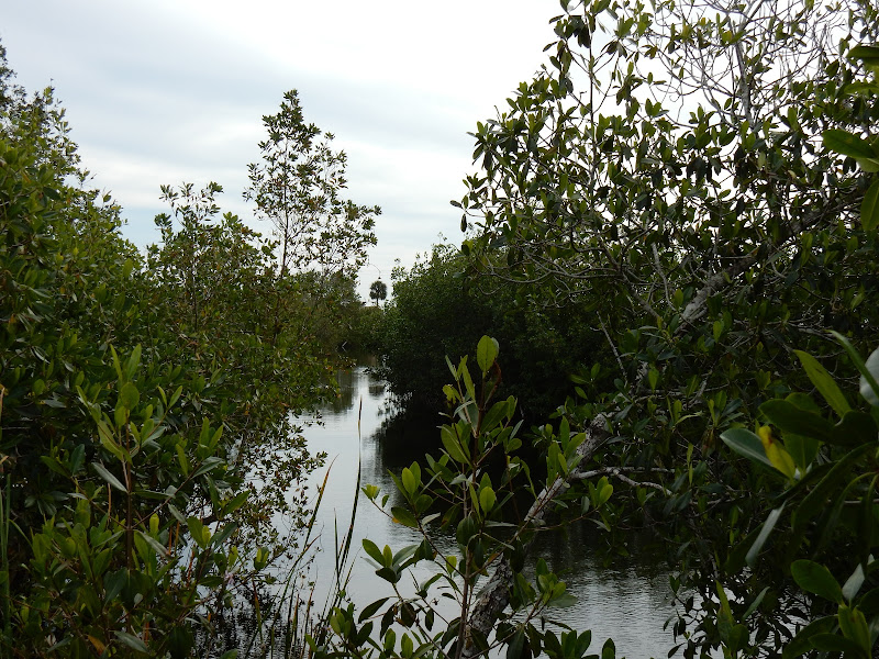 Ruta 41, Everglades National Park, Florida, US, Los Cayos de Florida, Elisa N, Blog de Viajes, Lifestyle, Travel