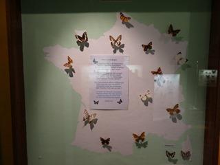 2016.03.14-020 papillons de France