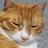 いたち avatar image