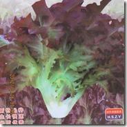 Hamburg Nobility Nutrition Lettuce