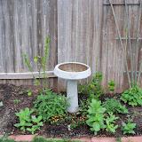 Gardening 2011 - 100_7170.JPG