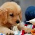Nguyên do chó hay ăn đất, cạp tường - Cách điều trị