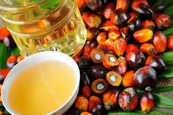 Is palm oil bad for you? Know the facts that most people not know about