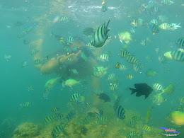 family trip pulau pari 090716 GoPro 19