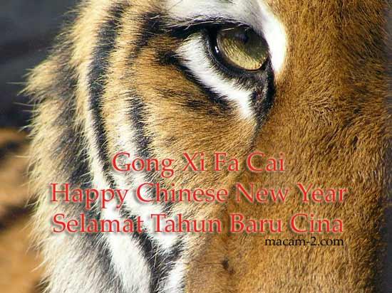 Tiger, Gong Xi Fa Cai
