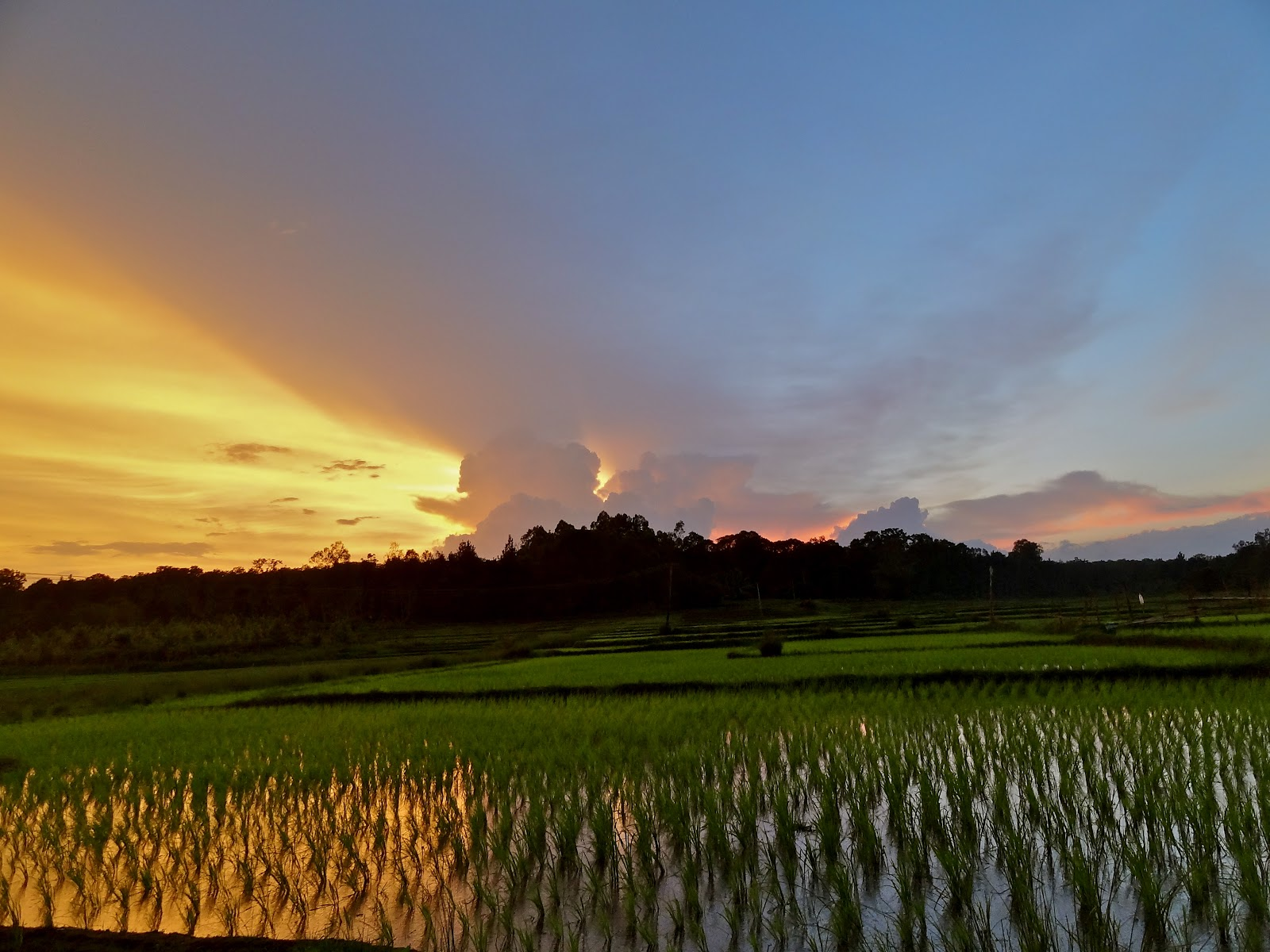 rice-paddy-sunset.jpg