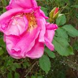 Gardening 2014 - 116_5271.JPG