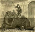 Elefánt mosdatása a budapesti állatkertben, 1886 (Fotó: OSZK)