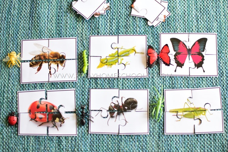FREE Insect Printable Puzzles