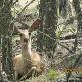 Wildlife encounter!!