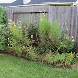 Gardening 2010, Part Three - 101_5165.JPG