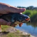 20140621_Fishing_Shpaniv_005.jpg