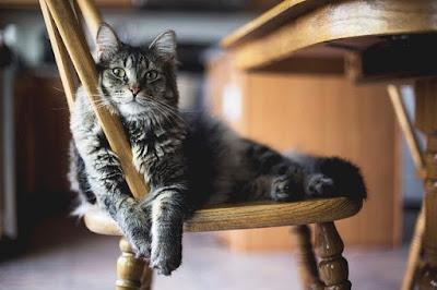 Menambah Nafsu Makan Kucing