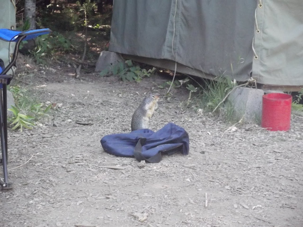 """The """"Small Bear"""" even had his own lunch sack."""