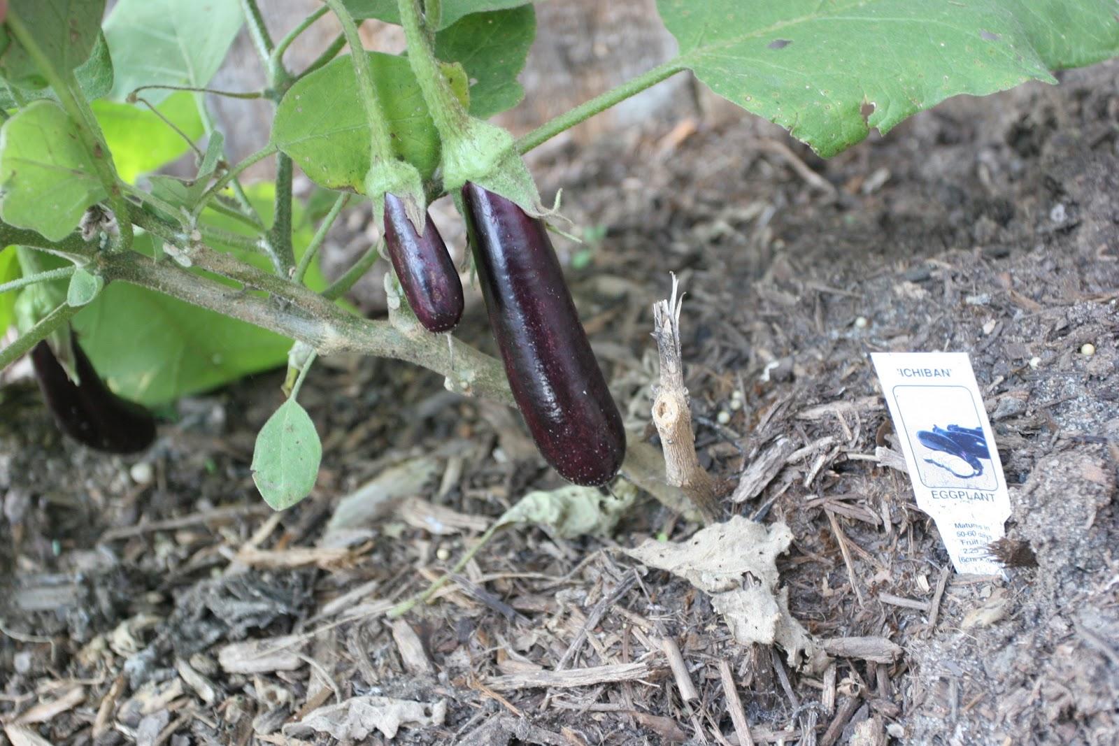 Gardening 2012 - IMG_2890.JPG