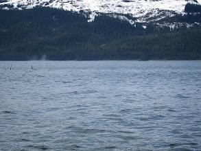 Photo: Orca fins