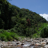 Affluent du Rio Coroico (au nord de Coroico à 1080 m d'alt., Yungas, Bolivie), 15 octobre 2012. Photo : C. Basset
