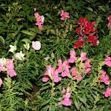 Gardening 2012 - IMG_3089.JPG