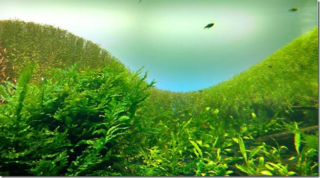 florestas-submersas-lisboa-2