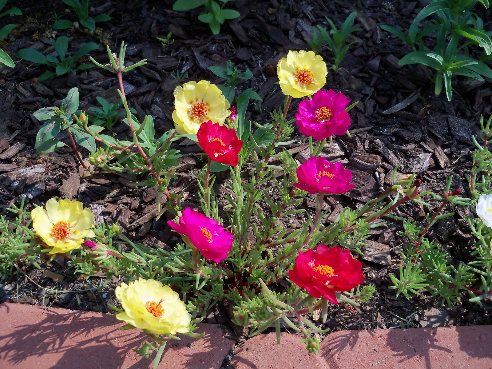 Gardening 2010, Part Two - 101_1849.JPG