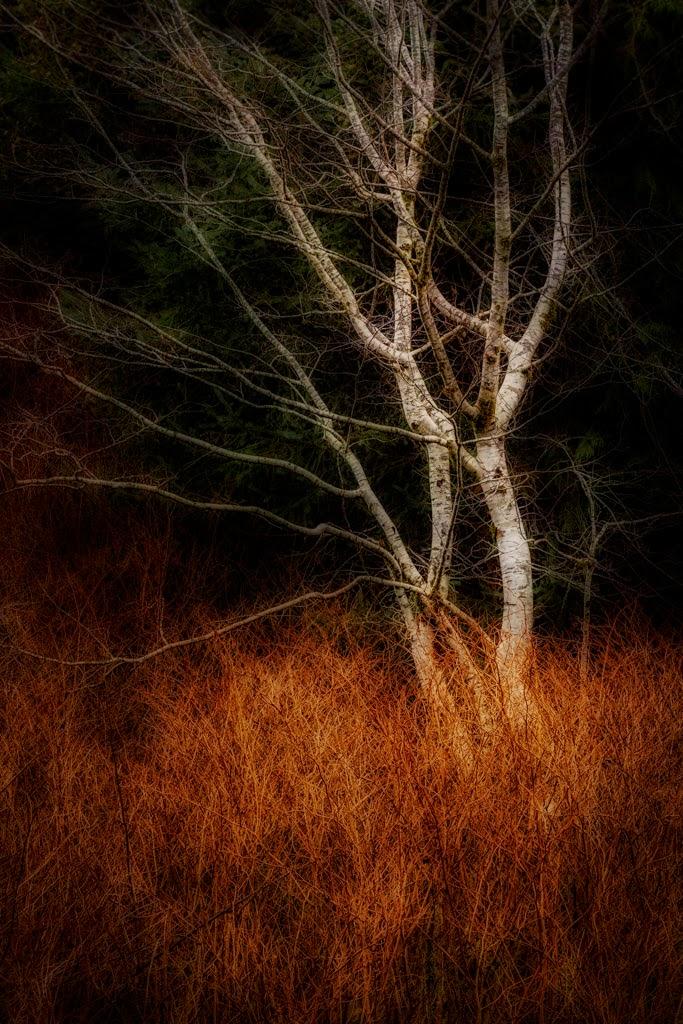 2015-02 Top Picks - 56-P_G_A_KroppR_Winter%2BGlow.jpg