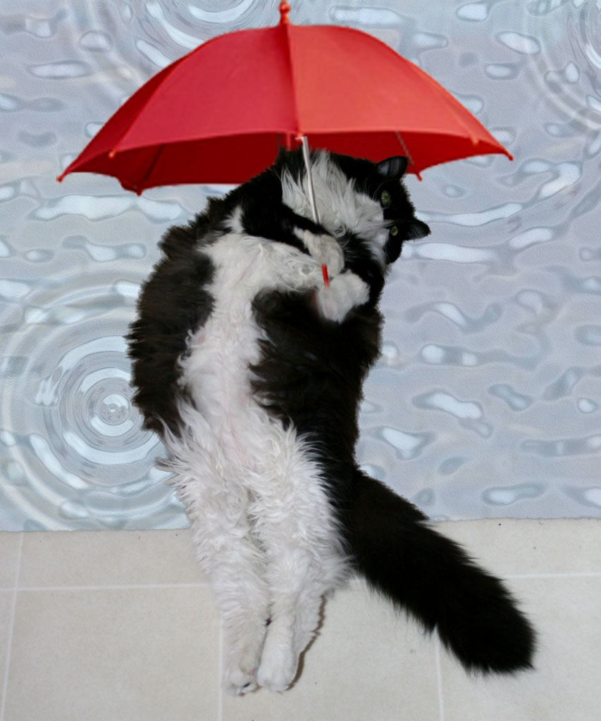 Where Did The Expression Raining Cats And Dogs Come From