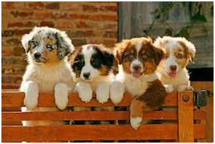 Key Considerations When You Wish To Get A Puppy For Your Home